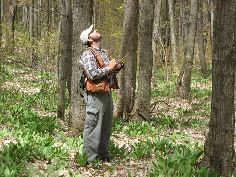 Paul Drysdale Assessing Trees